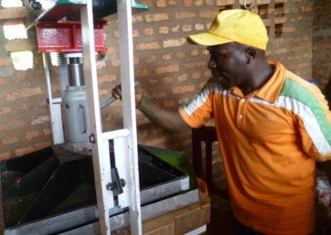 Ligne d'extraction foliaire de niébé au Burundi
